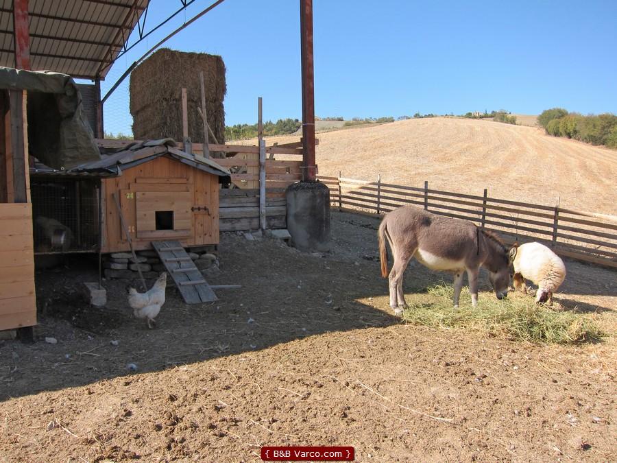 B&B Varco - La fattoria