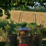 Nord Oasi: il giardino
